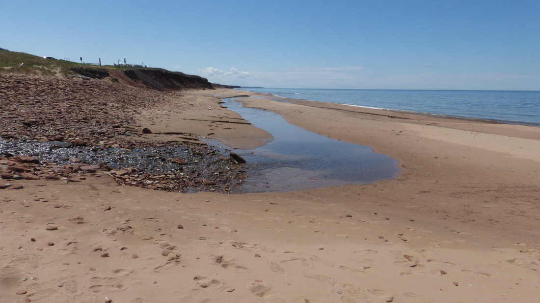Beach seep, PEI National Park, Canada.