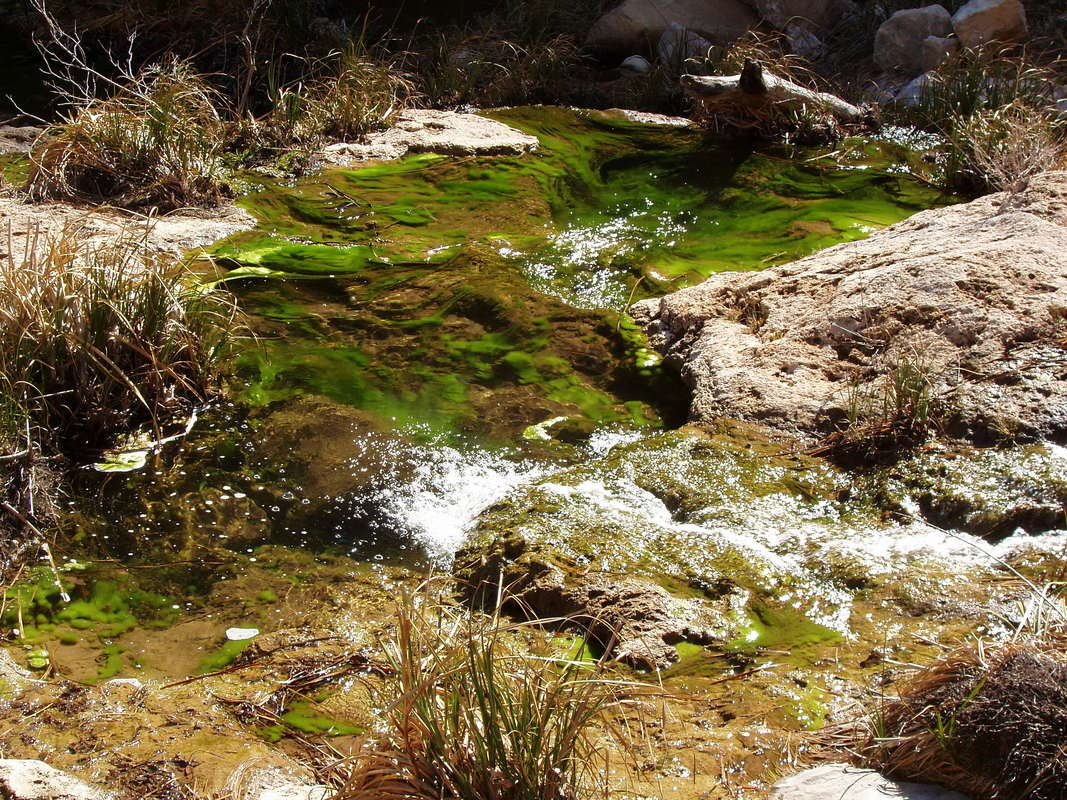 Verdant pools at Sitting Bull Falls oasis